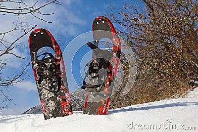 Pair of snowshoe