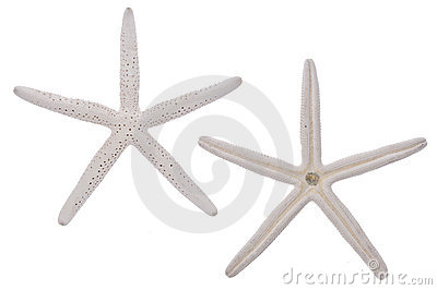 Pair of White Starfish