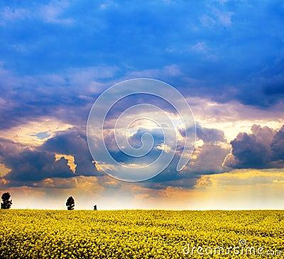 Paisagem - campo de flores amarelas e do céu nebuloso