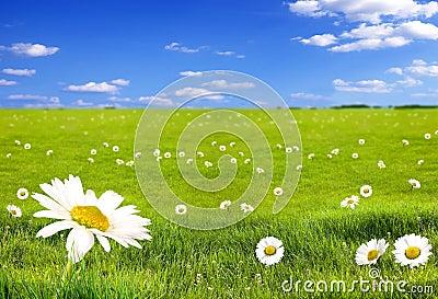 Paisagem com flores
