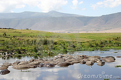 Paisagem da cratera com hipopótamos