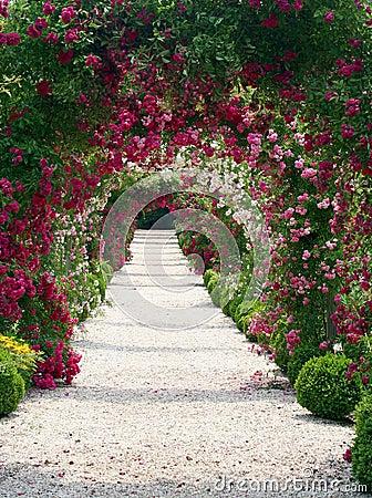 Paisagem do jardim de rosas