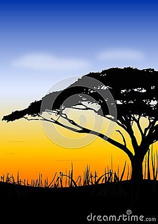 Paisagem do pôr-do-sol de África
