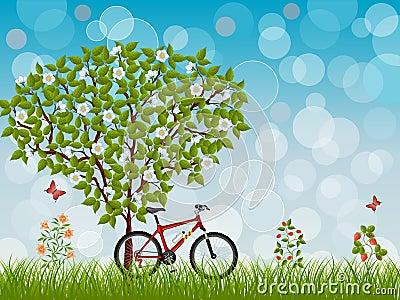 Paisagem do verão com uma bicicleta