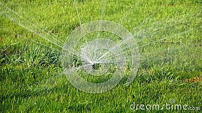 Paisagem do VERÃO Sistema molhando automático para plantas e gramado Sistema de extinção de incêndios da água que rega a grama no vídeos de arquivo
