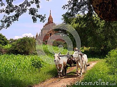 Paisagem do vintage de Myanmar