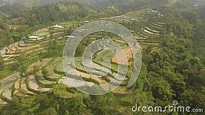 Paisagem tropical com terras agrícolas em montanhas video estoque