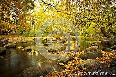 Paisaje amarillo del parque en el otoño