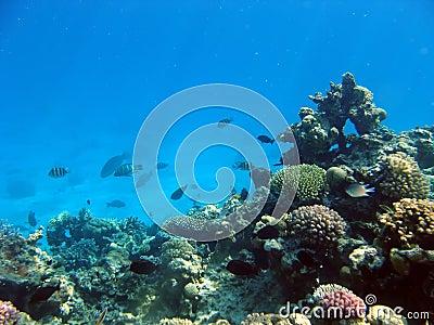 Paisaje bajo el agua fotos de archivo imagen 11754623 for Imagenes de hoteles bajo el agua