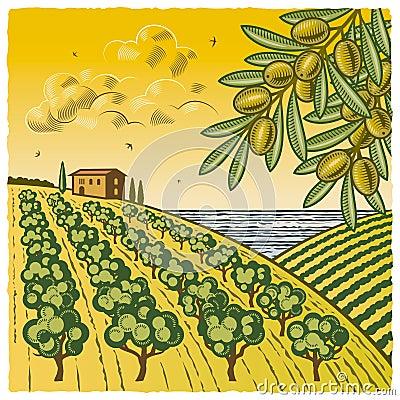 Paisaje con la arboleda verde oliva