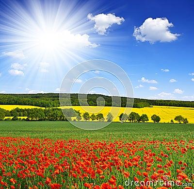 Paisaje de la primavera con el campo de la amapola