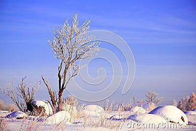 Paisaje del invierno