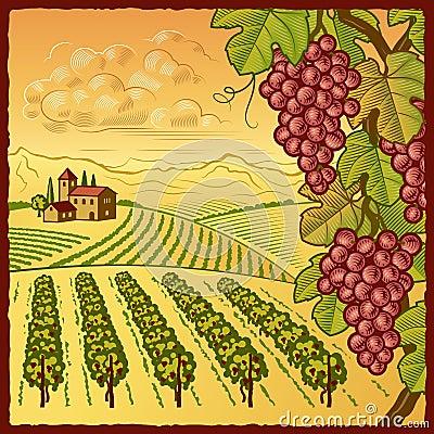 Paisaje del viñedo