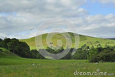 Paisaje inglés del campo: colinas, rastro, pájaro