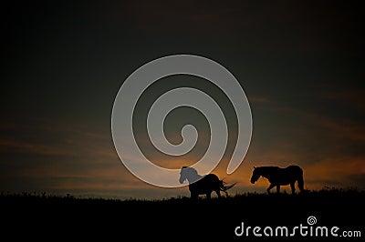 Paisaje oscuro con los caballos salvajes en la puesta del sol