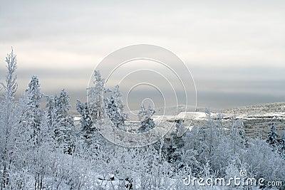 Paisaje polar del invierno