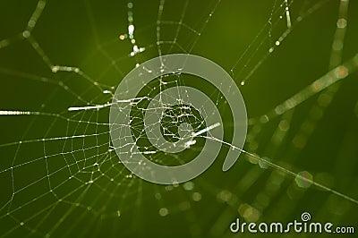 Pająk sieć