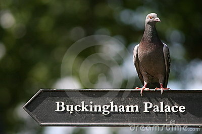Palace Bird