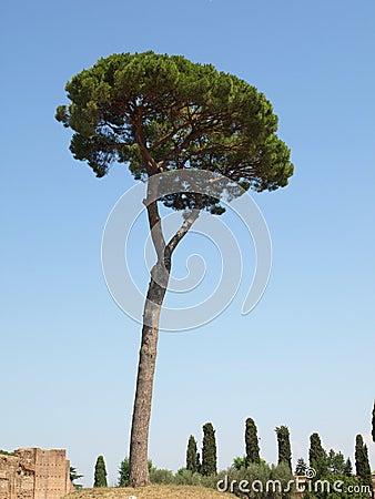 Palantine Tree
