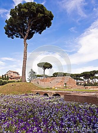 Free Palatine Hill Rome Italy Stock Photo - 25272080