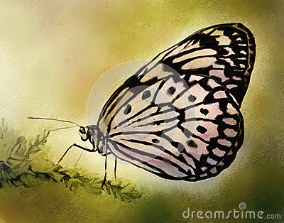 Pale Butterfly - Watercolor Painting