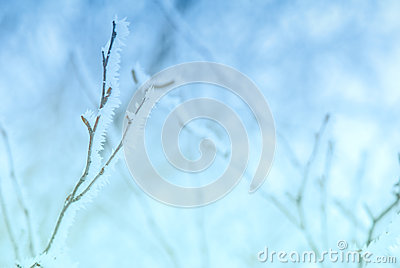 Pale cold winter branches