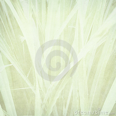 Pale grass print on paper