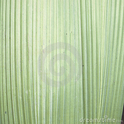 Pale green leaf  background