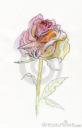 Pale pink rose.