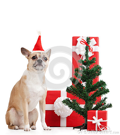 Pale yellow dog near the presents