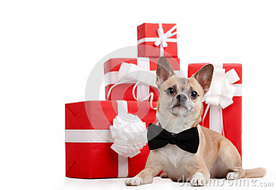 Pale yellow doggy lies near the presents