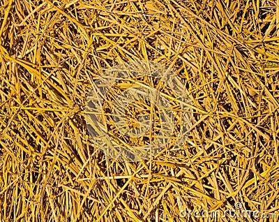 Palha dourada