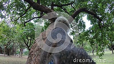 pallas 4k packen das Gehen weg und fühlen sich auf Niederlassung eines Baumparkwaldes neugierig stock footage
