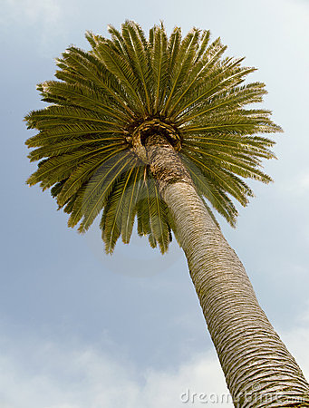 Palm against pretty blue sky