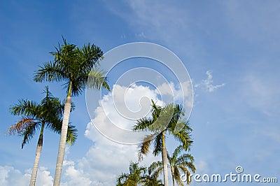 Palm againts sky