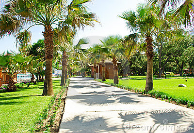 Palm alley
