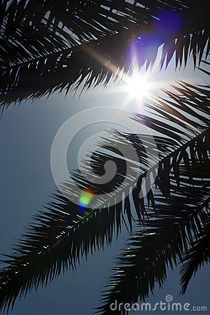 Palm, on the background of sky. Sunny Day