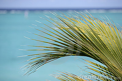 Palm on a background of turquoise water