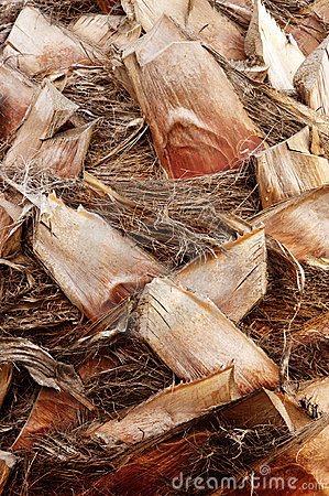 Free Palm Bark Texture Stock Photos - 16869873
