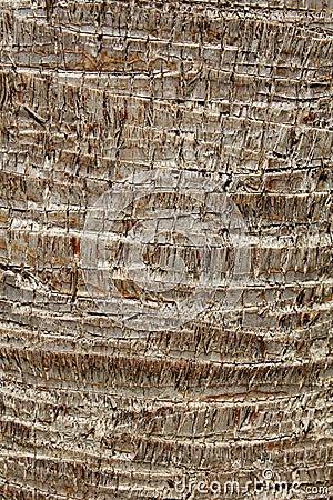 Palm bark texture