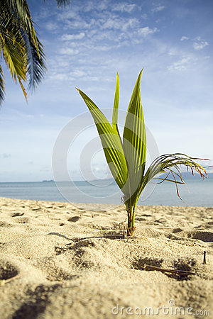 Palm on the beach