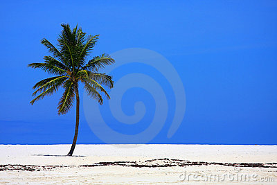 Palm on beach