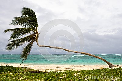 Palm on the beach island