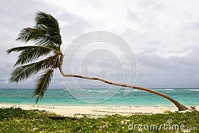 Palm on the beach island