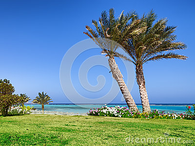 Palm beach and sea in Marsa Alam. Egypt