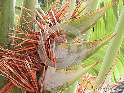 Palm with blossom