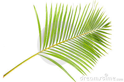 Palm Branches Clip Art Palm-branch-15522778.jpg