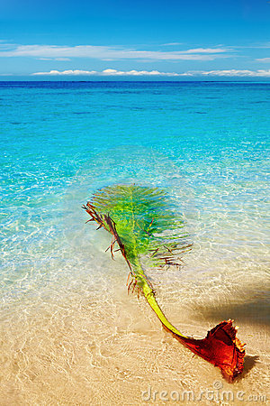 Palm branch on the beach