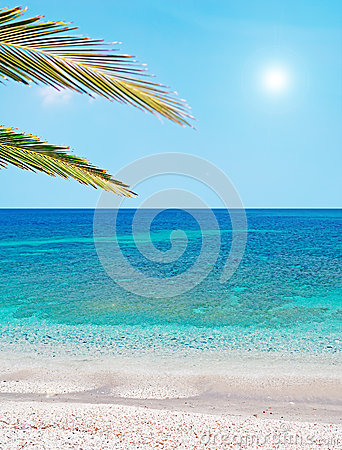 Palm branch and blue water