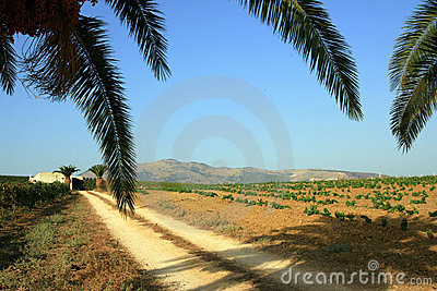 Palm branches over dirt road